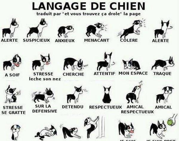 chien langage