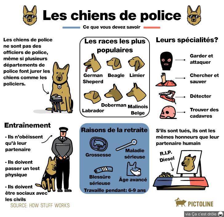 Ce que vous devez savoir sur les chiens de police