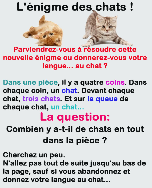enigme chat