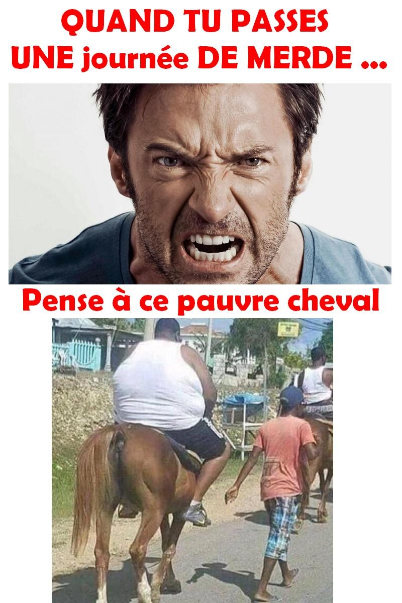 chevAlED