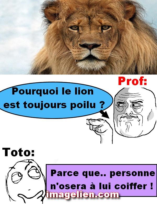 lion 3816